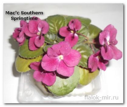 Mac's Southern Springtime